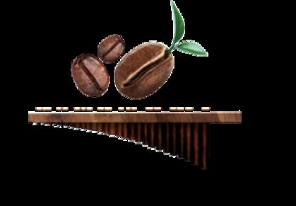 Green coffee imported from the Nueva Esperanza region of Honduras.