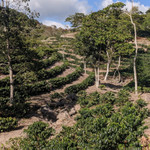 Las Moras Coffee Farm Siguatepeque