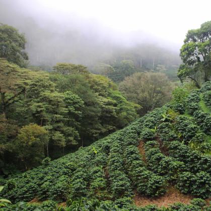 La Bastilla - Nicaragua Coffee Farm