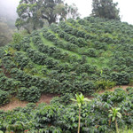 Nicaragua La Bastilla Coffee Estate