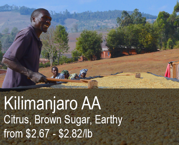 Kilimanjaro Peaberry is a classic coffee for any roastery..